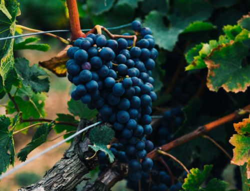 The Beauty of Winemaking